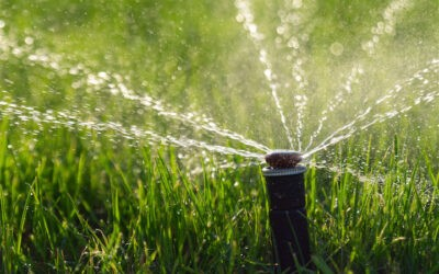 Spice Up Your Yard With a Sprinkler